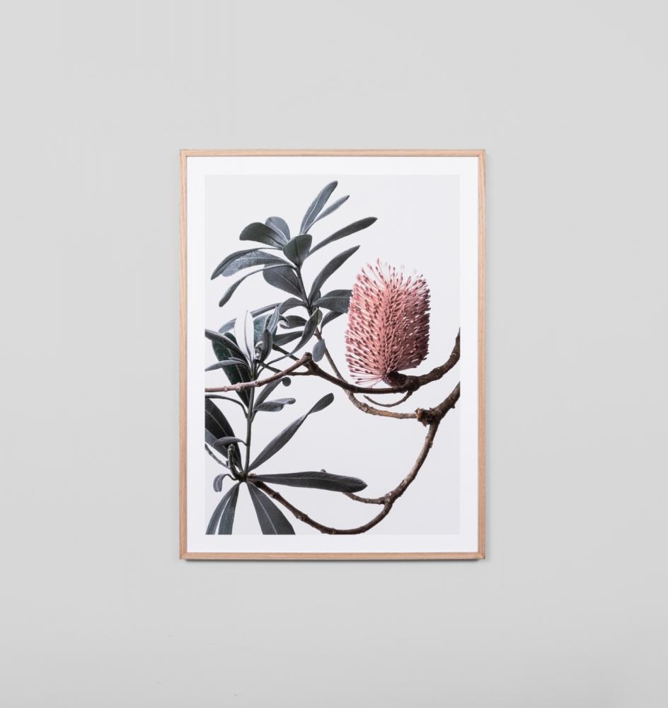 Banksia Portrait