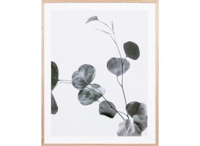 Eucalyptus Branch 2